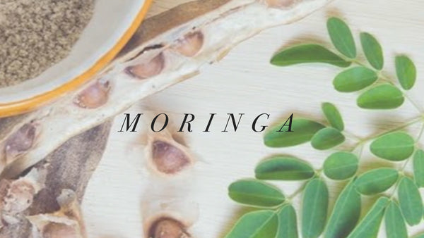 7 Ways Moringa Oil Benefits Skin & Hair