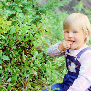 The beloved, bodaciously flavorful, unmistakable wild huckleberry - here's our Elissa eating them as a bity.