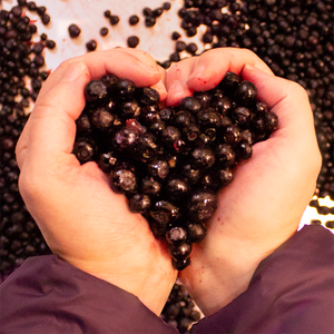 Wild and organic huckleberries, sugar and pectin make the best huckleberry products.