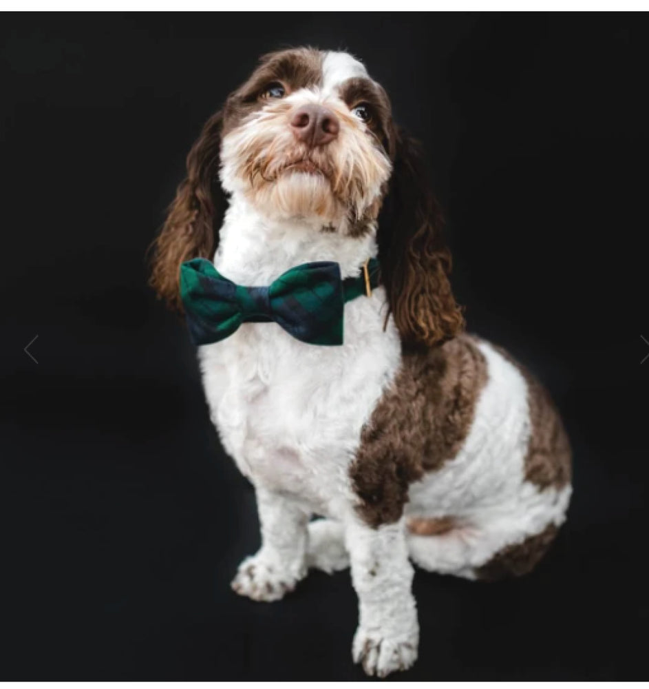 Black Watch Plaid Dog Bow Tie