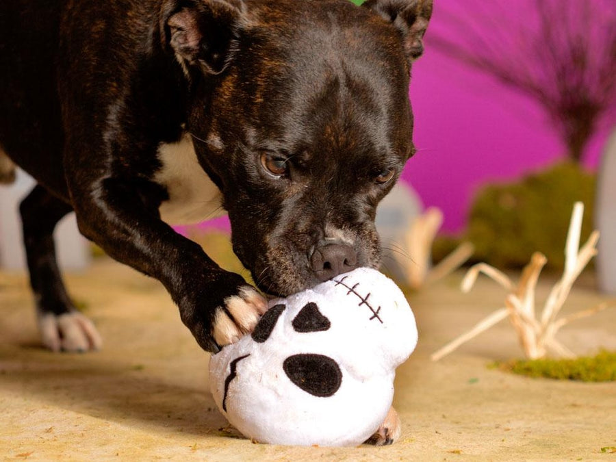 BARK<br>Moulderin' Skully<br>Dog Plush Toy