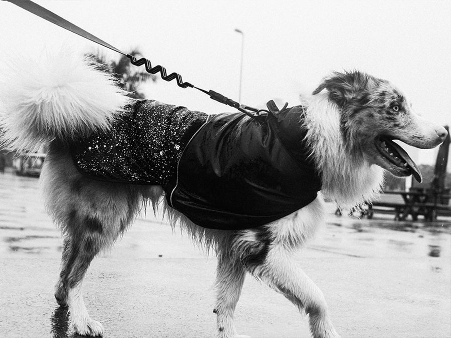 ZEE.DOG<br>Ozzy Dog Raincoat