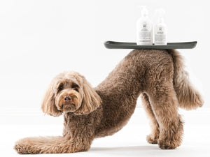 HOUNDZTOOTH<br>Natural Goat Milk Blend No. 1, 2, 3<br>Dog Shampoo & Conditioning Spray