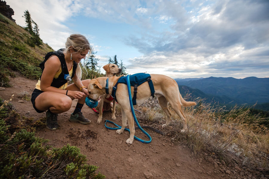 RUFFWEAR<br>Switchbak™ Lightweight Pack<br>No-Pull Handled Dog Harness<br>3 Colours