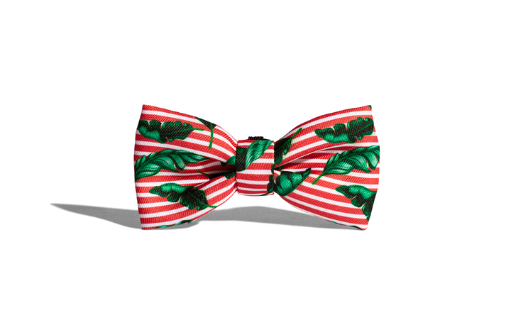10% OFF ⏰ ZEE.DOG<br>Bali Bow Tie