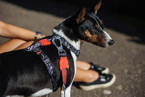 10% OFF ⏰ ZEE.DOG<br>Paisley H Dog Harness