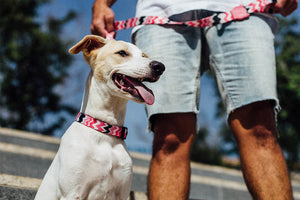 10% OFF ⏰ ZEE.DOG<br>Maui Dog Collar
