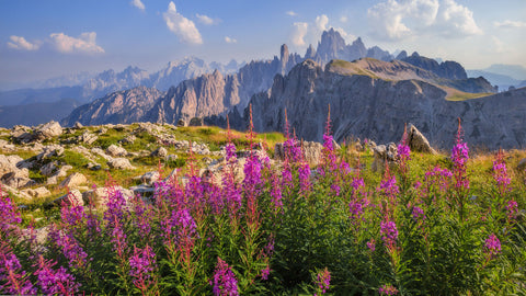 Metok Chulen della Dolomiti - Flower Chulen of the Dolomites