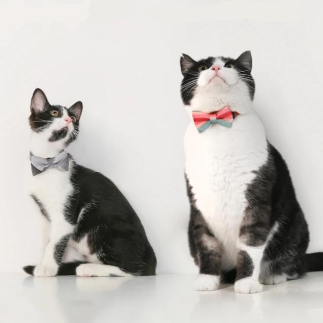 England Style Cat Bowties-Beauty-Alfy & Co-Alfy & Co