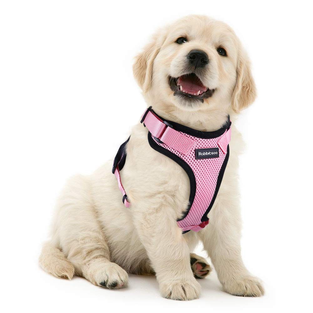 Harness for cats and small dogs-Outdoor-Alfy & Co-Alfy & Co