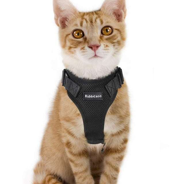 Harness for cats and small dogs-Outdoor-Alfy & Co-Black-S-Alfy & Co