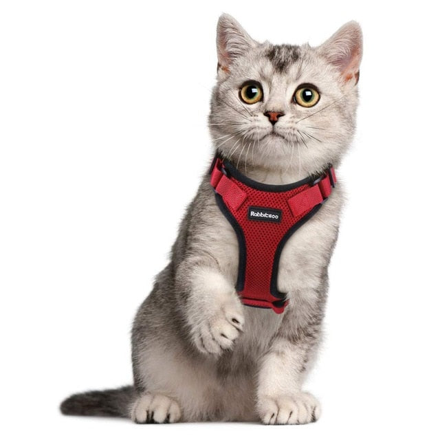 Harness for cats and small dogs-Outdoor-Alfy & Co-Red-S-Alfy & Co