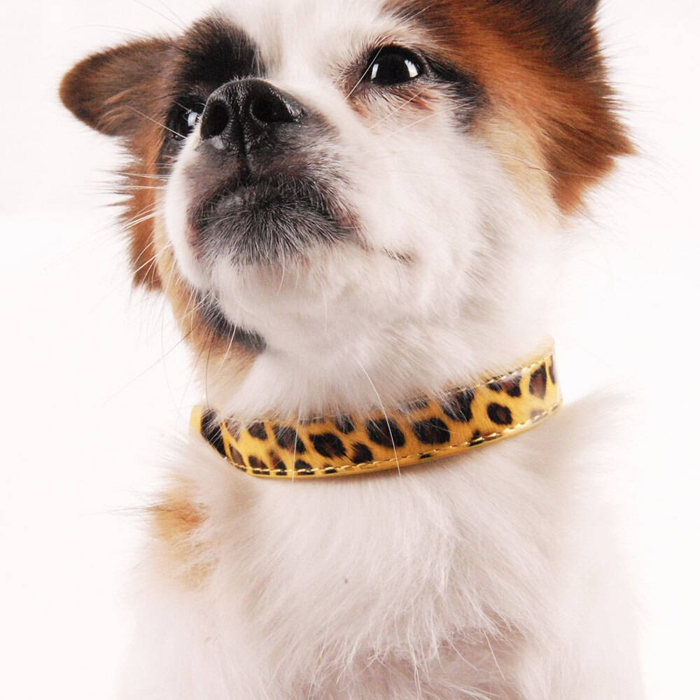 Leopard pattern dog collar-Outdoor-Alfy & Co-Alfy & Co