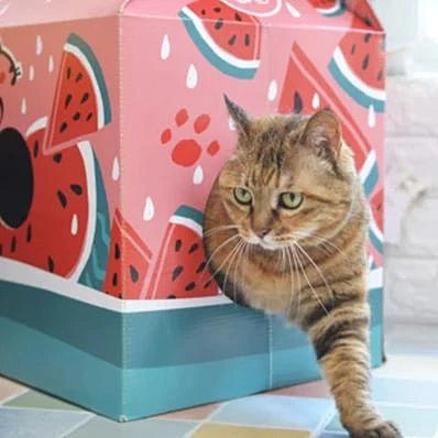 Diy cat house juice box-Playing-Alfy & Co-Alfy & Co