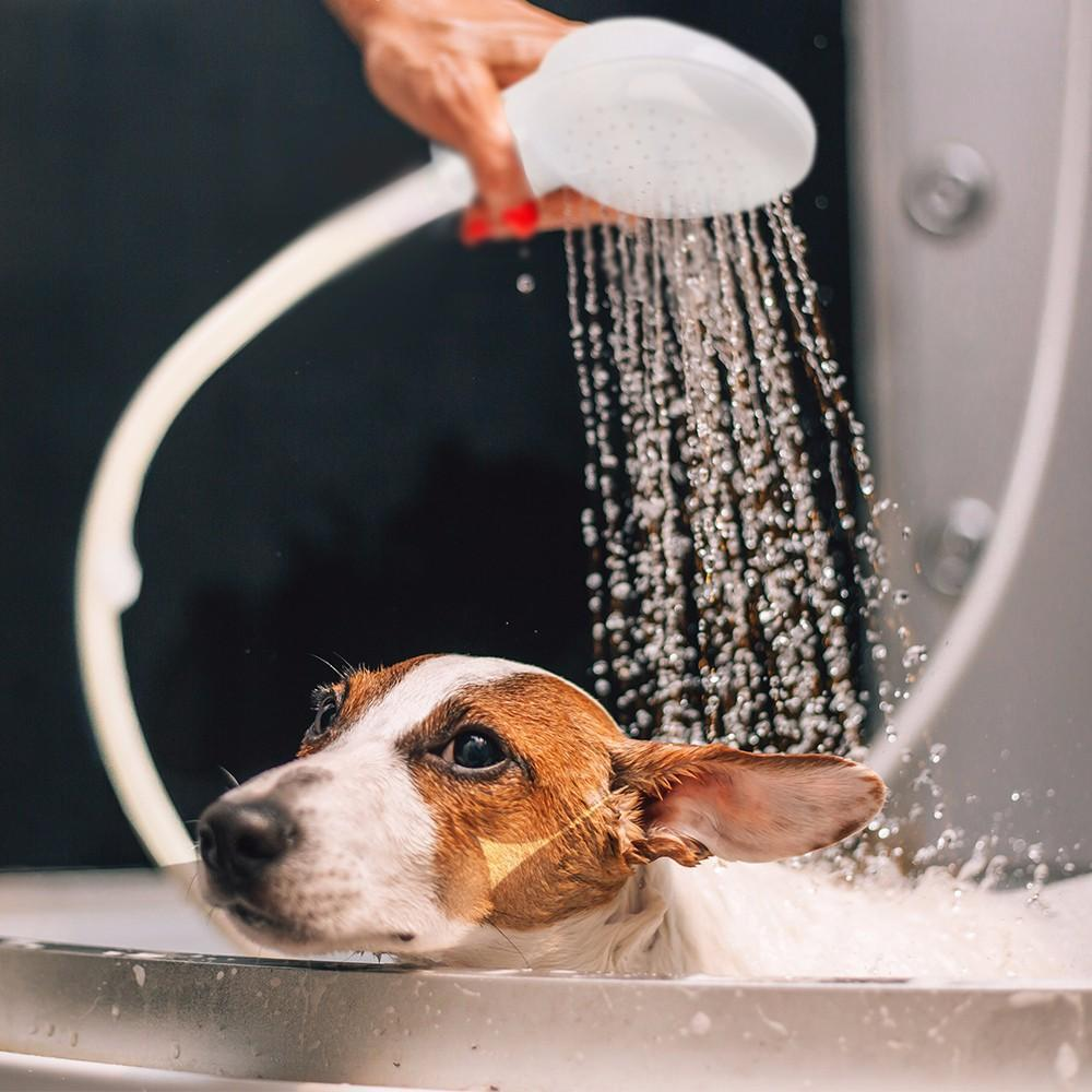 Portable pet shower-Beauty-Alfy & Co-Alfy & Co