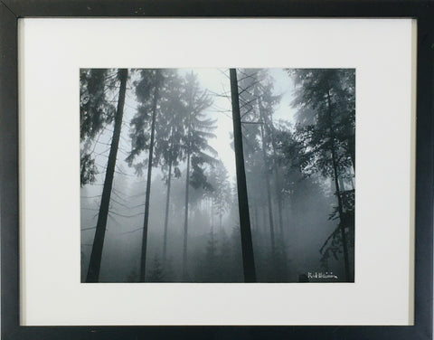 Foggy Trees photo framed