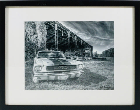 Mustang photo framed