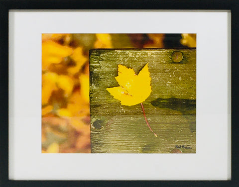 Fall Yellow Leaf photo framed