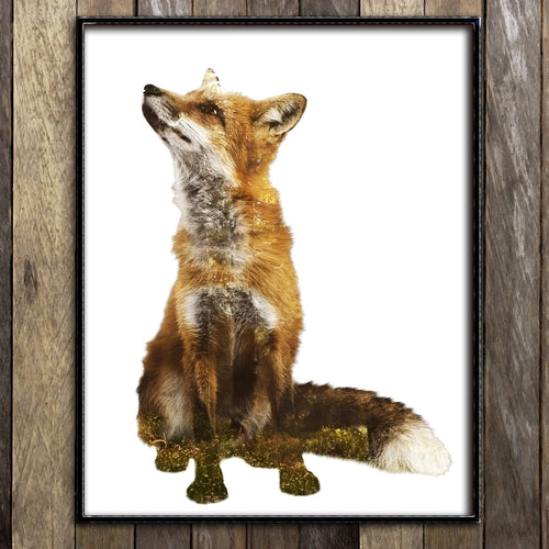 Woodland Red Fox Print
