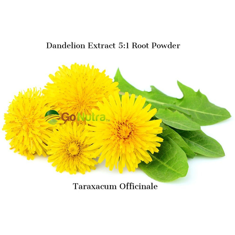 dandelion root powder tarassaco liver detox
