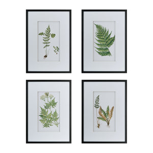 SET/4 BOTANICAL FERN WALL ART