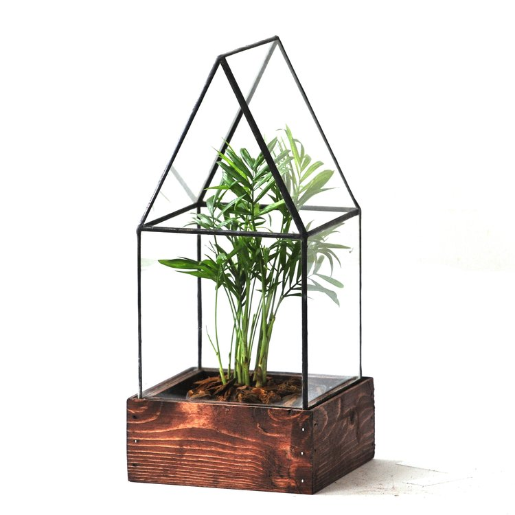 The Cape Cod Terrarium - Pure Detroit
