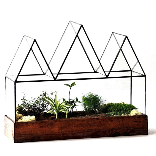 Fortune's Case Terrarium - Pure Detroit