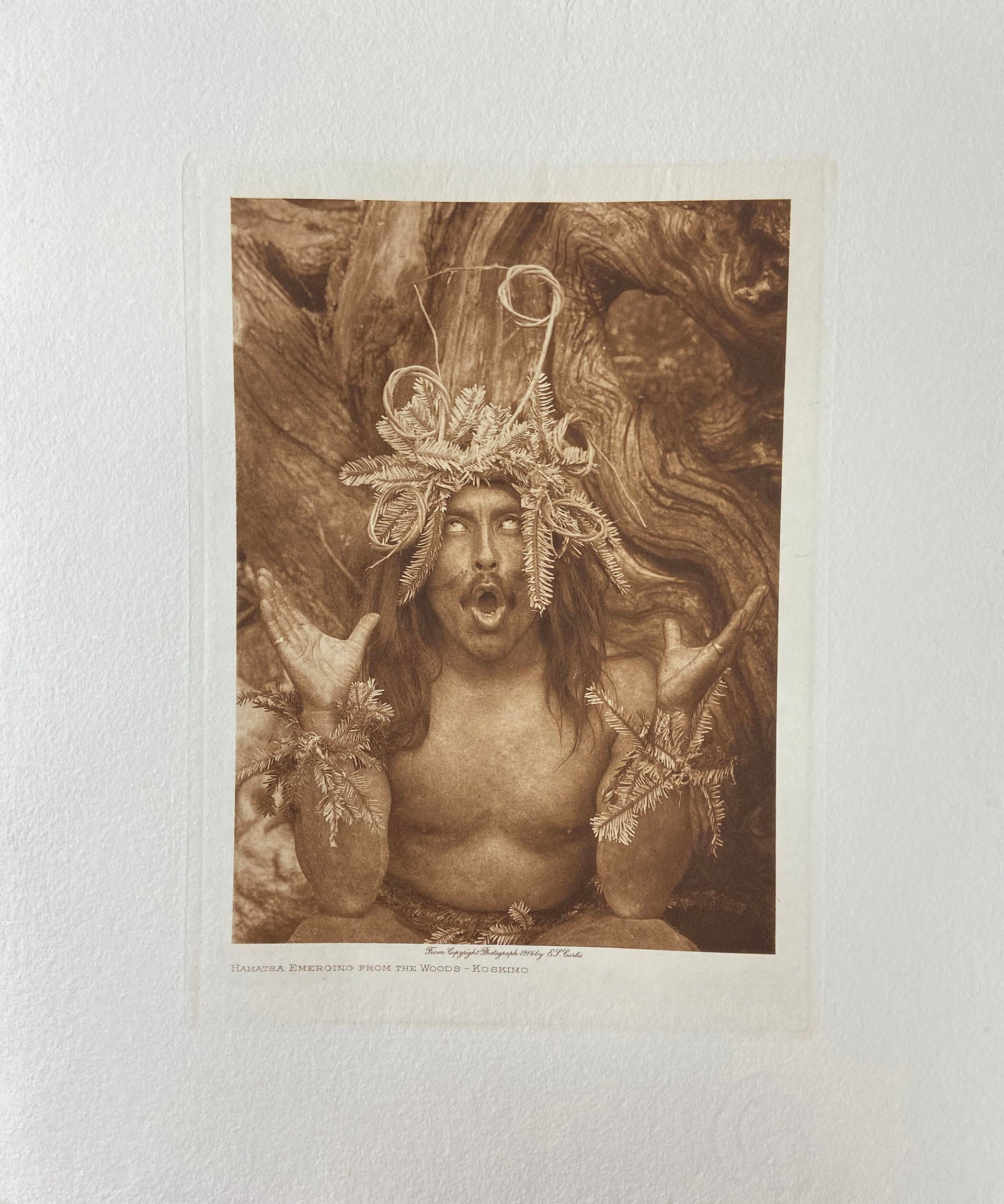 Hamatsa Emerging From the Woods
