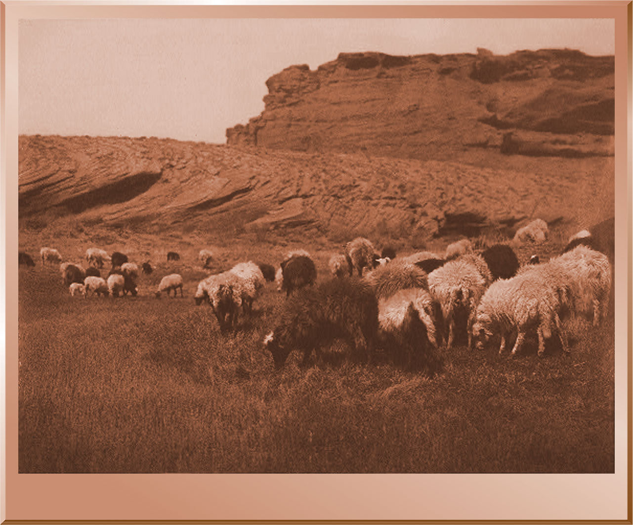 Navaho Flocks