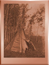 Camp among the Aspens - Chipewyan