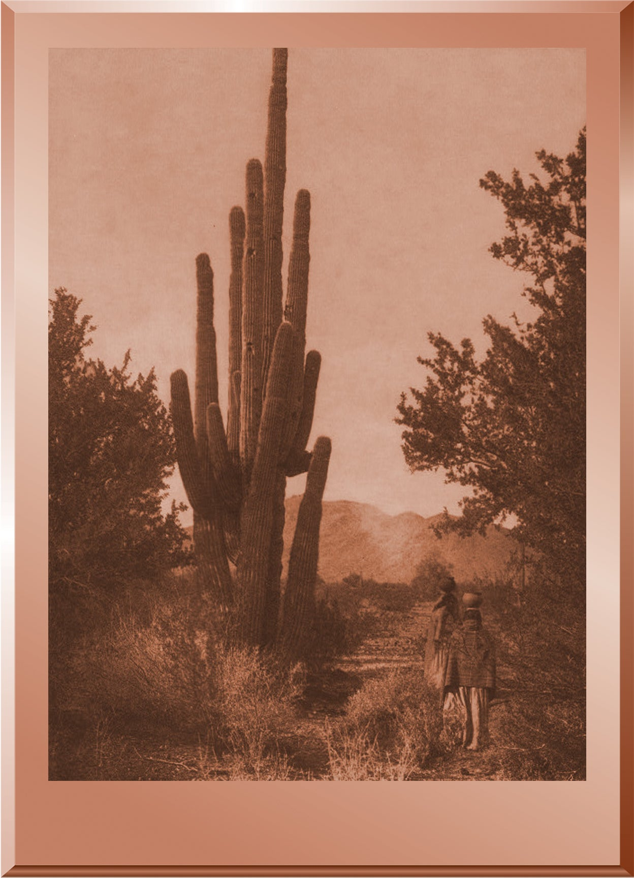 Gathering Cactus Fruit - Pima