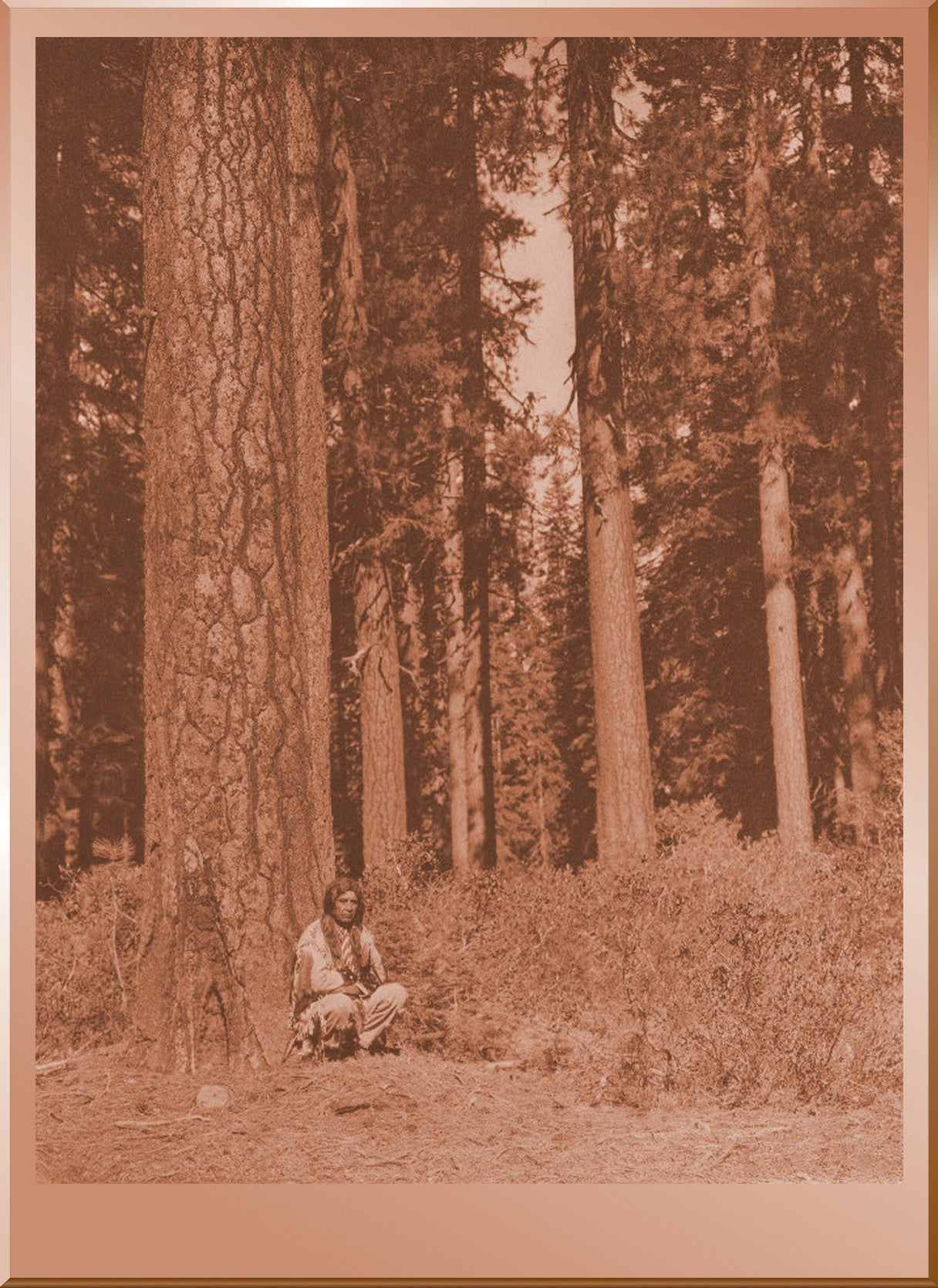 In the Forest - Klamath