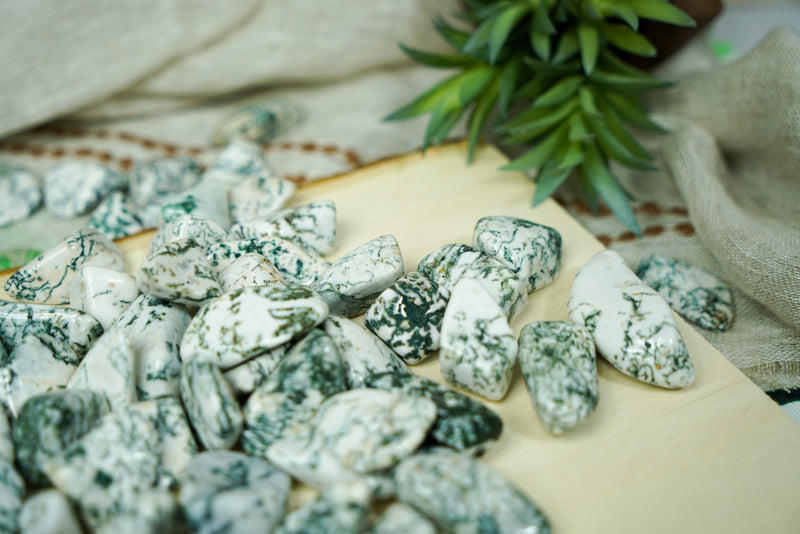 Tumbled Tree Agate for Grounding & Nature