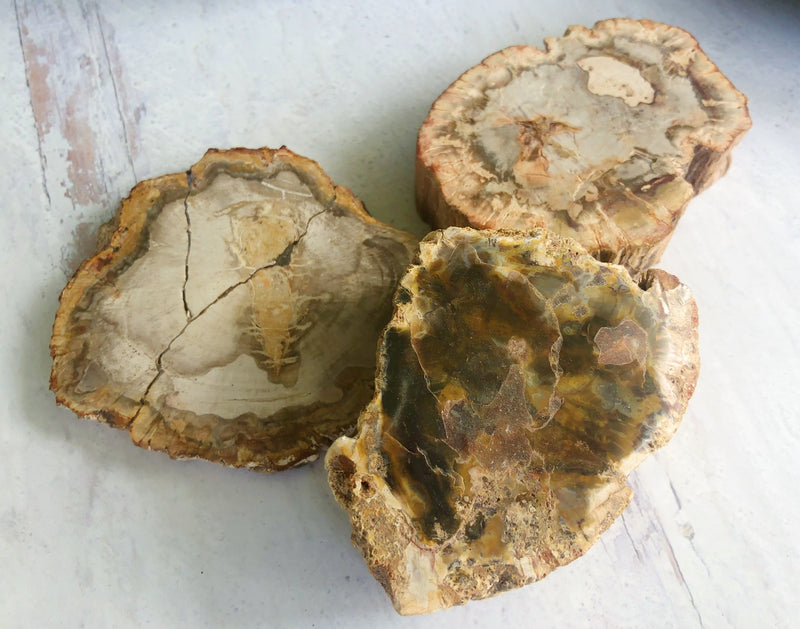 Petrified Wood Slabs for Grounding & Ancestor Connection