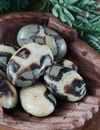 Septarian Palm Stones for Calming & Tranquility
