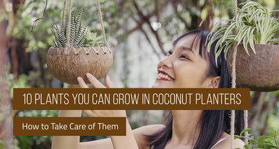 10 Plants You Can Grow in Coconut Planters & How to Take Care of Them