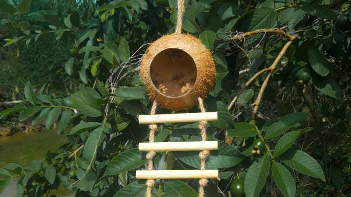 Coconut Birdhouse with Ladder