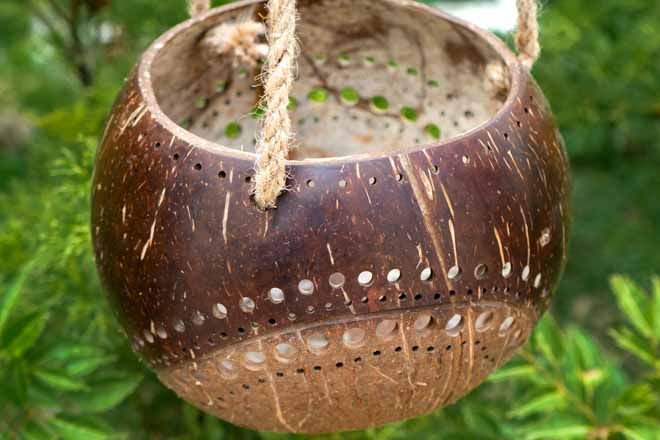 Hanging Two-Toned Coconut Planter
