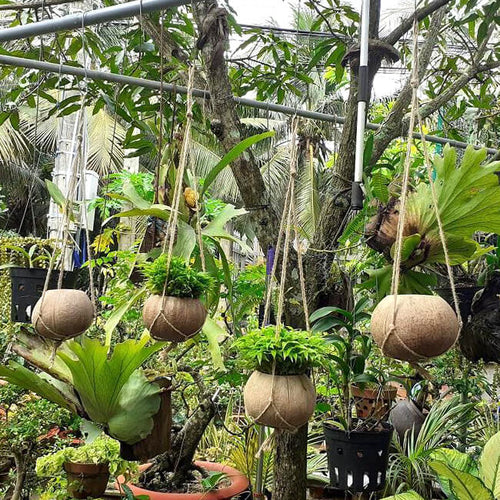 Hanging Coconut Planter