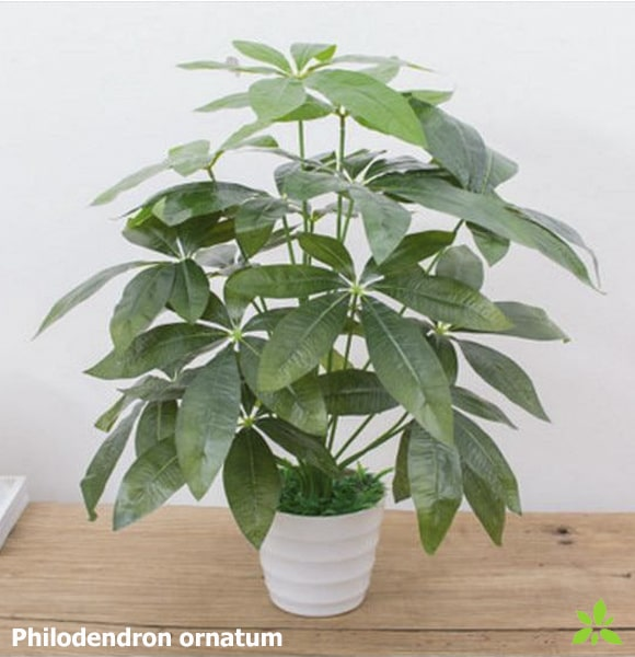 Philodendron ornatum artificiel