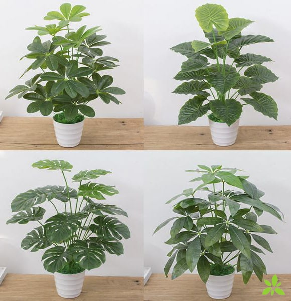 Sélection de Philodendron artificielle