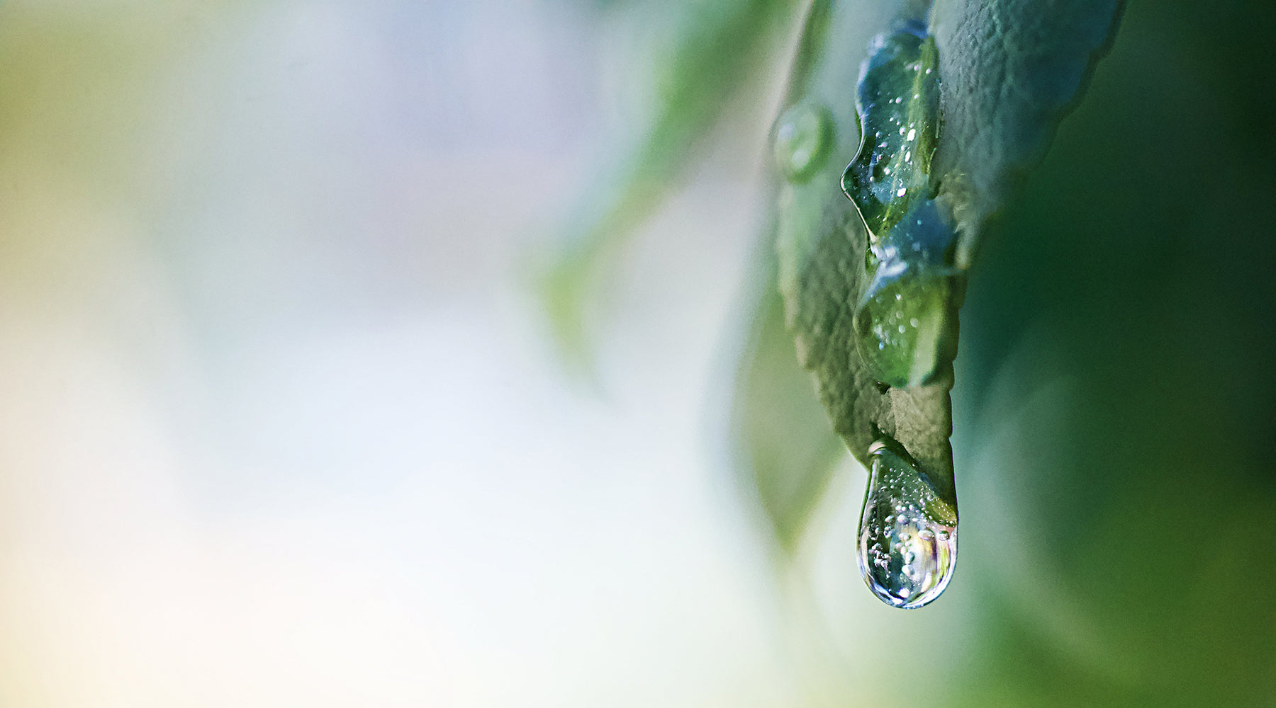 Moisture droplet on green leaf | Nikki Darling Australia