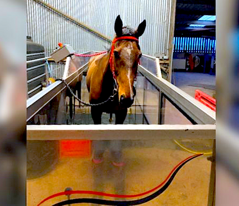 equine rehab, underwater treadmill for horses