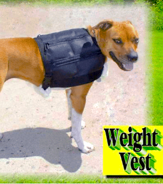 ACTIVE DOG MUSCLE BUILDING GEAR: help your pet reach their full potential