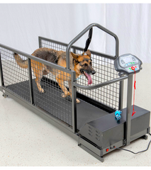 AIR PAWS LAND TREADMILLS: additional workout options for conditioning and rehab