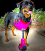 BIONIC PETS: custom pet prosthetics worldwide