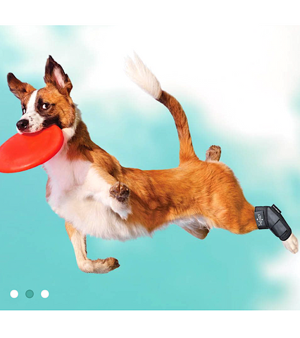DOGLEGGS: neoprene wrist and ankle braces for dogs