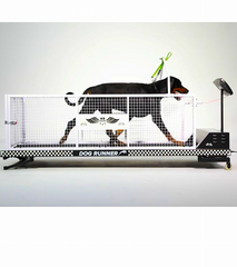 DOG RUNNER TREADMILL PRO: the only choice for highly athletic dogs
