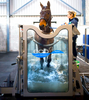 ECB EQUINE AQUA TREADMILL: the latest technology and performance analysis