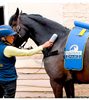 EQUISSAGE VIBRATION MASSAGE: cycloid massage therapy for equine athletes